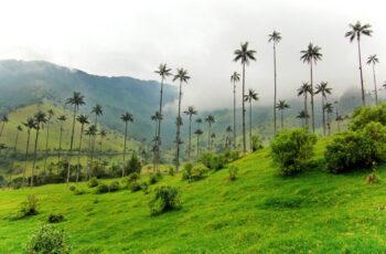 valle de cocora colombia viva