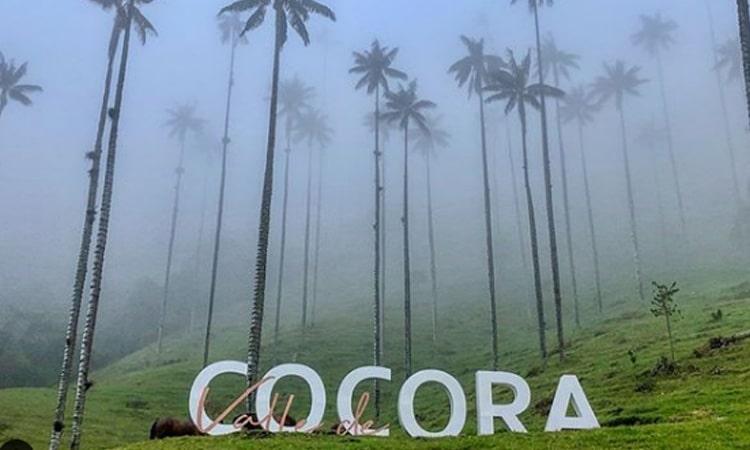 valle de cocora viva colombia